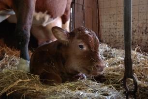 wenige Tage nach der Geburt im Stall