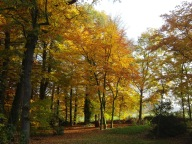 Herbsteinkehr im Buchen- und Eichenwald