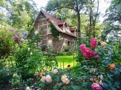 Rosenmeer vor dem Backhaus
