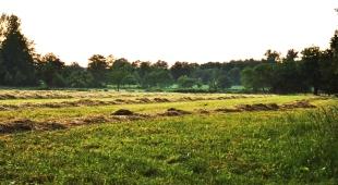 Futter für unsere Herde im Winter, direkt von unseren Felder